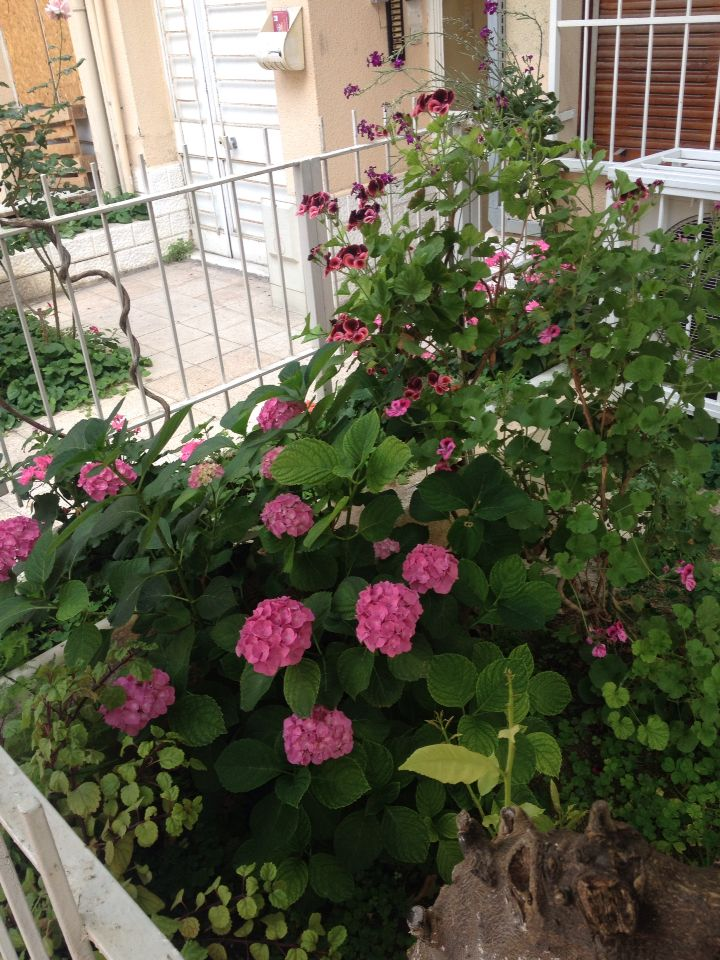 İzmir Karşıyaka Pink flowers.
