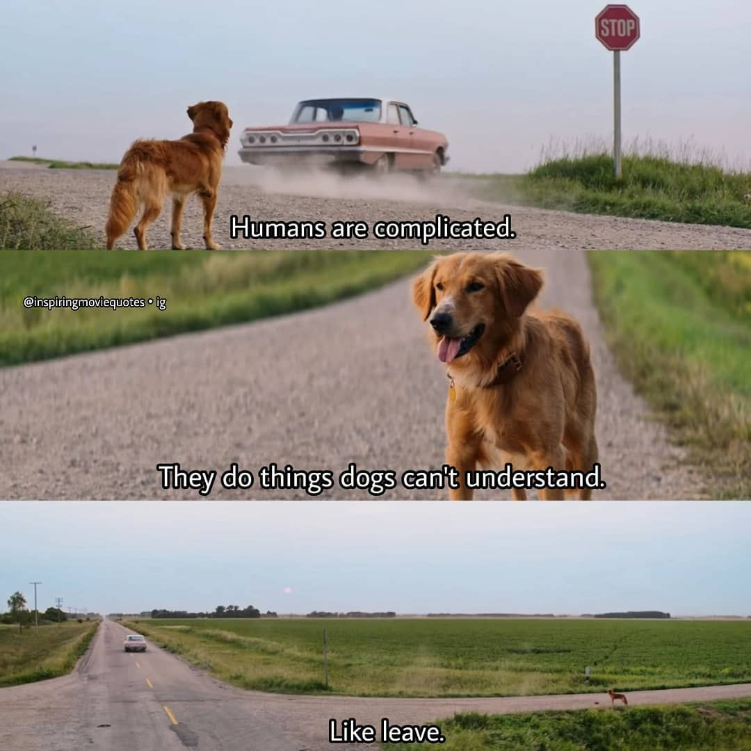 A Dog S Purpose Is Full Of Genuine Heart Humor And A Real Message Of Love The Plain Dealer Own It On Blu Ray Dvd Digita A Dogs Purpose Dog Movies Dogs