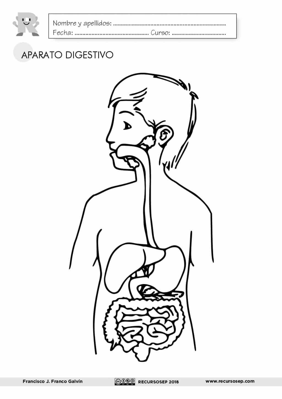 El Aparato Digestivo Laminas Para El Aula Y Fichas Para El Alumno Es En Sistema Digestivo Para Ninos Aparato Digestivo Dibujo Actividades Del Cuerpo Humano