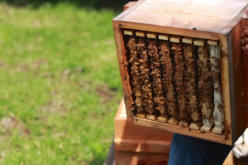 Examining Natural Beekeeping