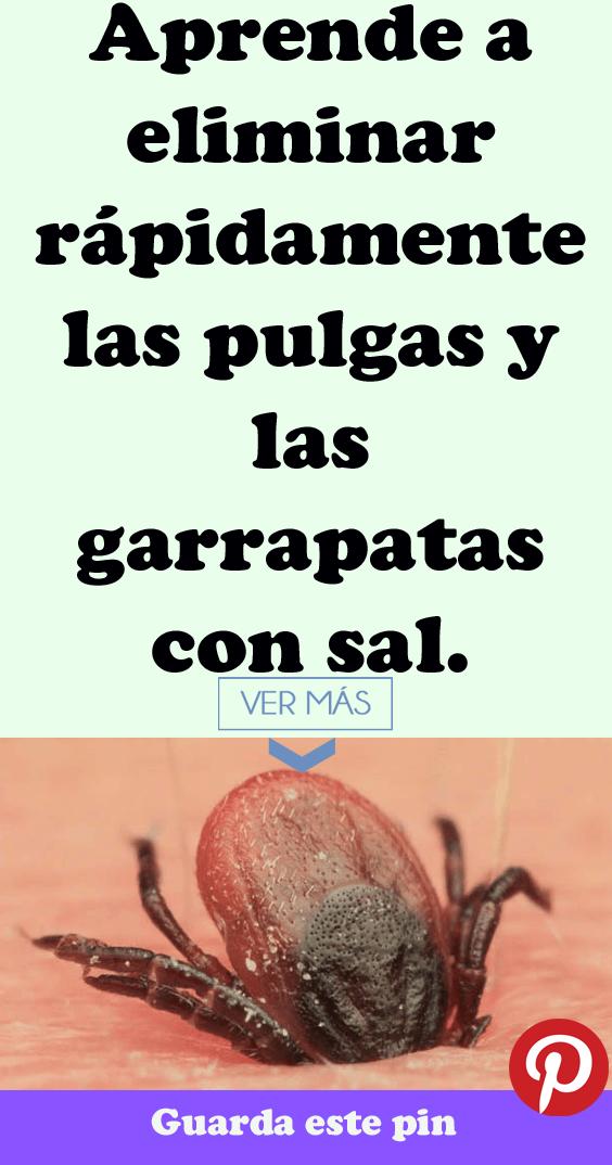 Aprende A Eliminar Rápidamente Las Pulgas Y Las Garrapatas Con Sal Pulgas Y Garrapatas Garrapatas Como Eliminar Garrapatas