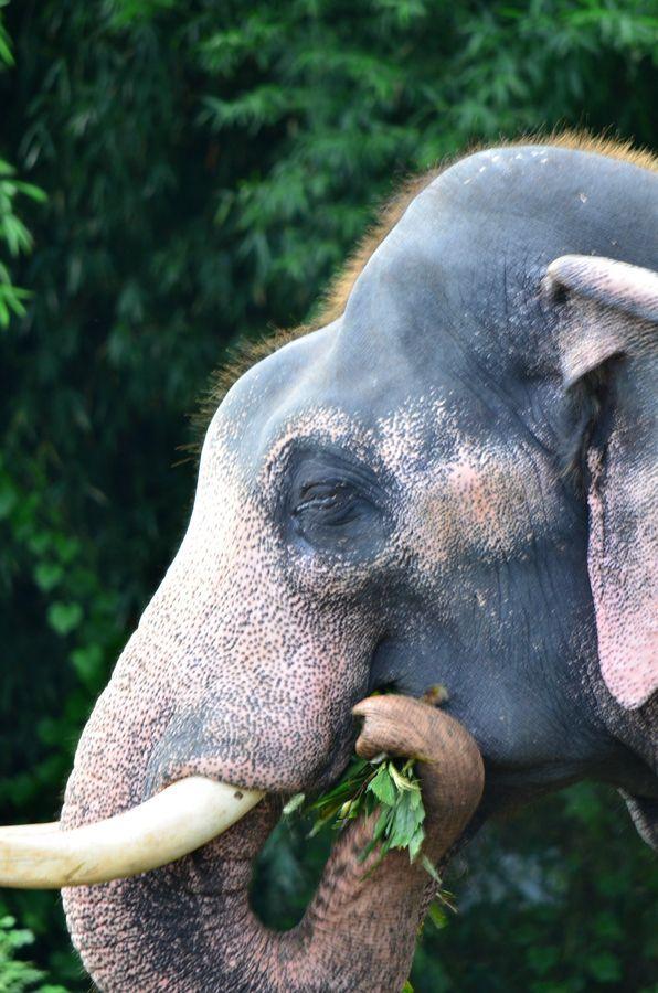 Legends Of Kerala Kerala Elephant Animals Elephant