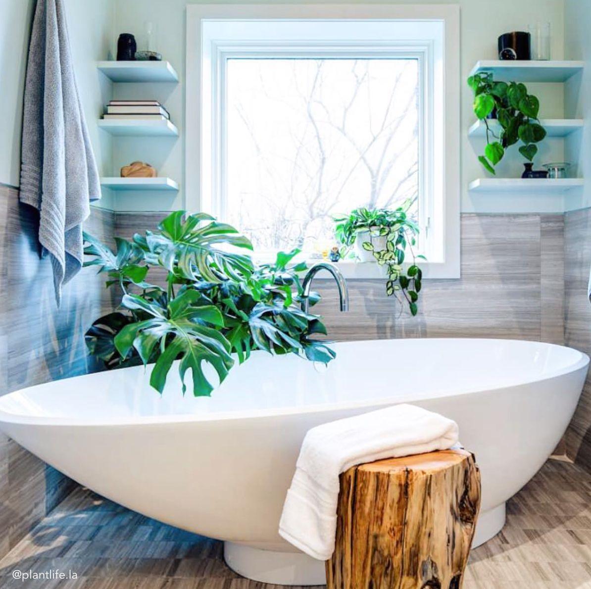 Dschungel badezimmer dekor  sensationelle pflanzen für badezimmer bilder ideen  mehr auf