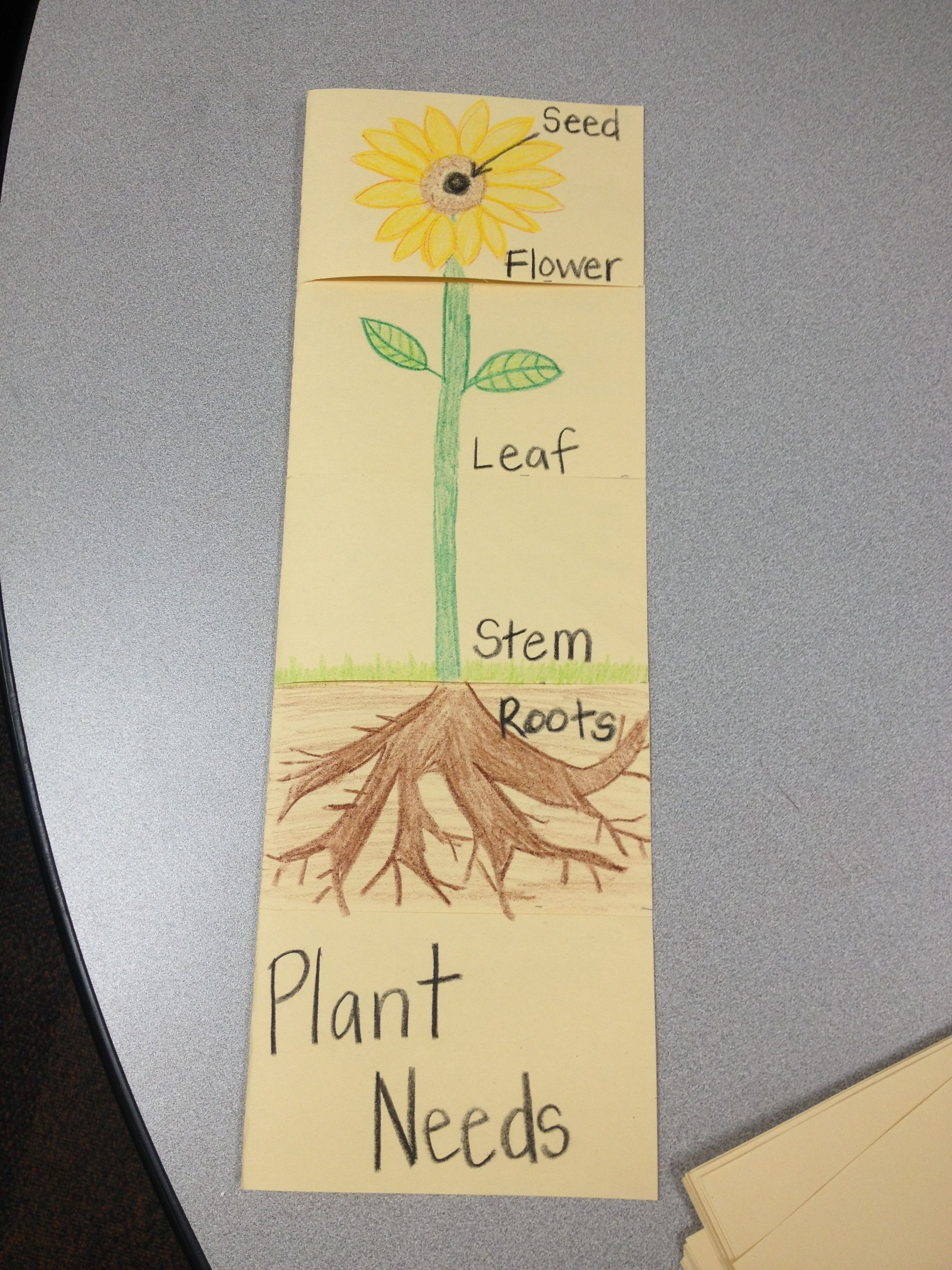 Parts of a plant flip book   Education   1st grade science ...