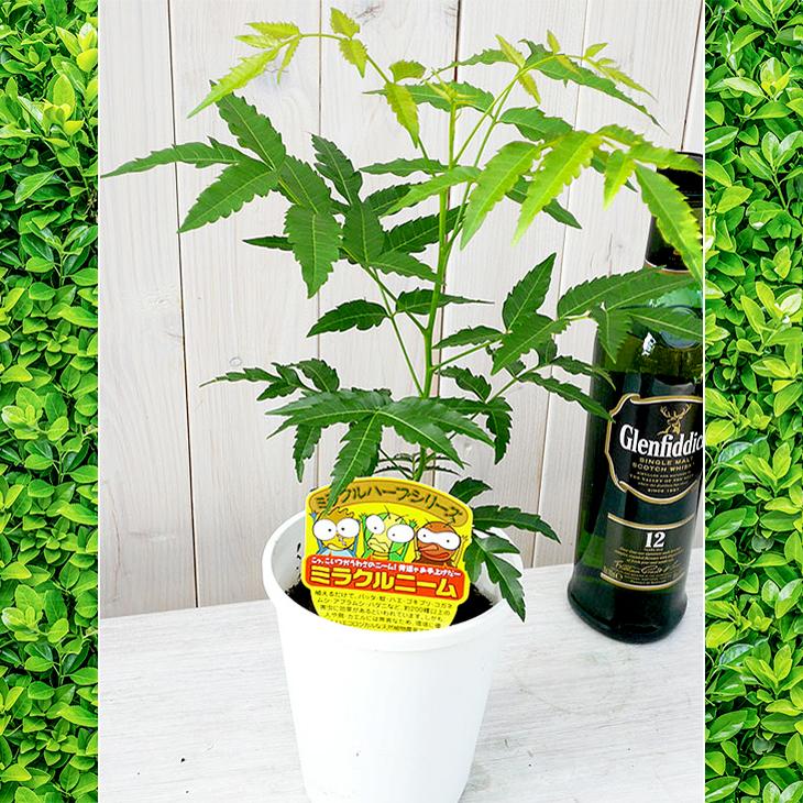 観葉 植物 虫除け
