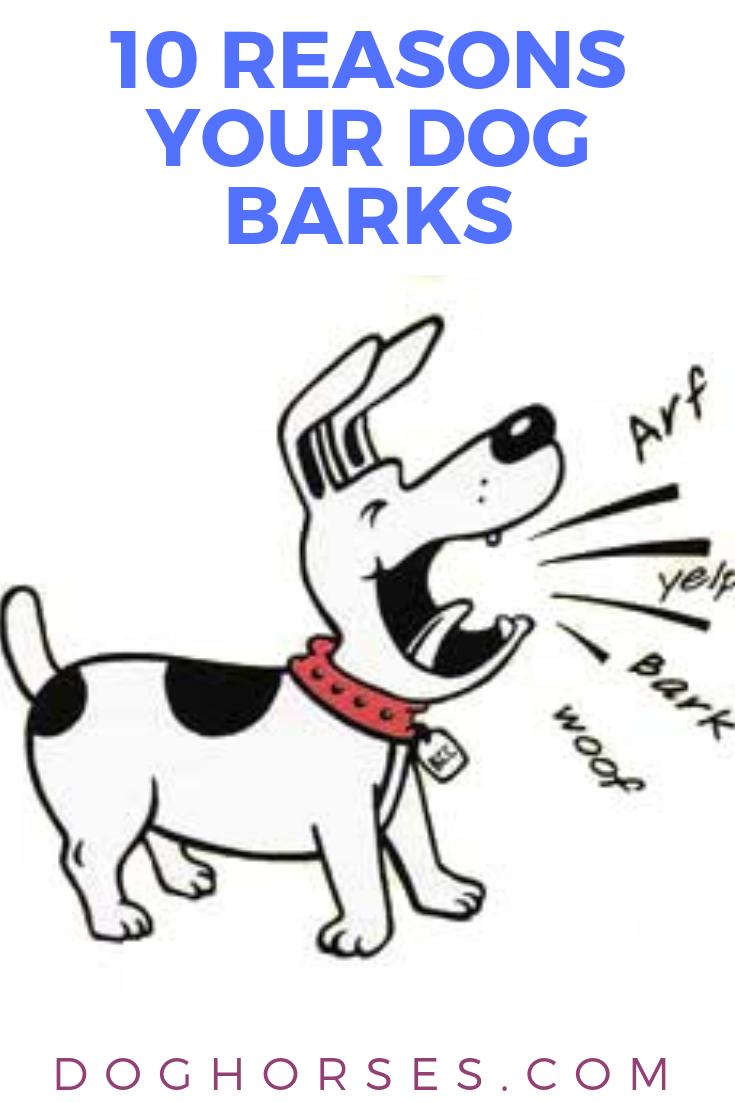 10 Reasons Your Dog Barks Dog Barking Your Dog Dog Paw Care