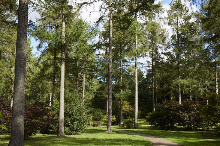Gardening 101: Pine Trees | Pine tree, Garden ideas and Gardens