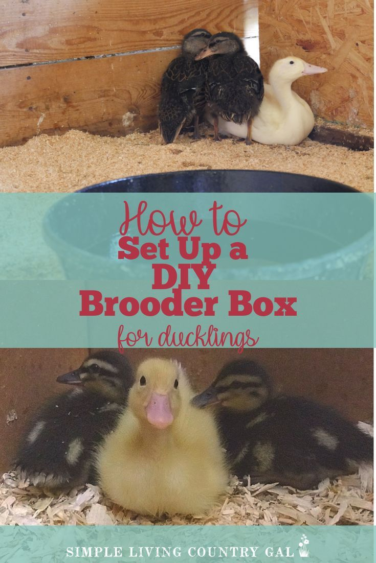 Diy house for ducklings and chicks that you can make today