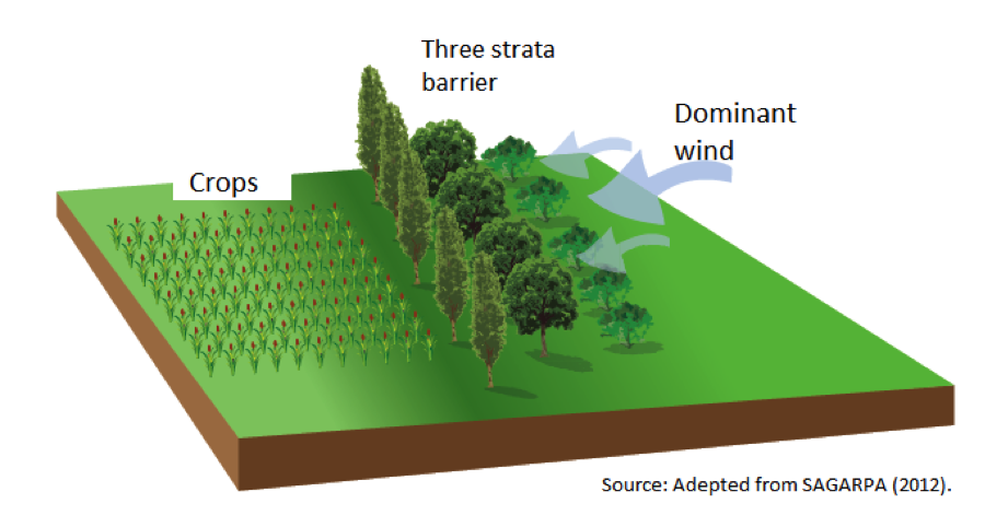 A 3 Row Shelterbelt Illustration Click For Info On Trees