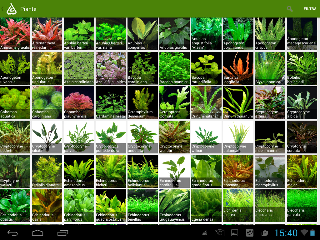 Carpet aquarium plants or foreground aquarium plants are for Freshwater pond plants
