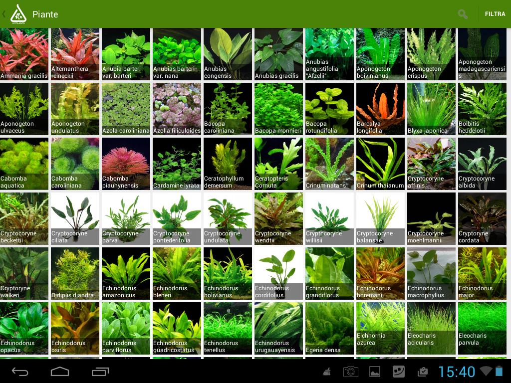 Carpet aquarium plants or foreground aquarium plants are ...