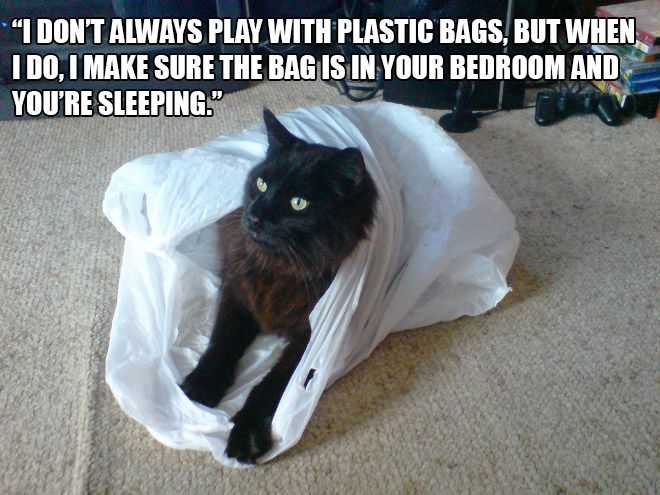 Hilarious Struggles Only Cat Owners Will Understand Funnies - Hilarious cat owners struggles