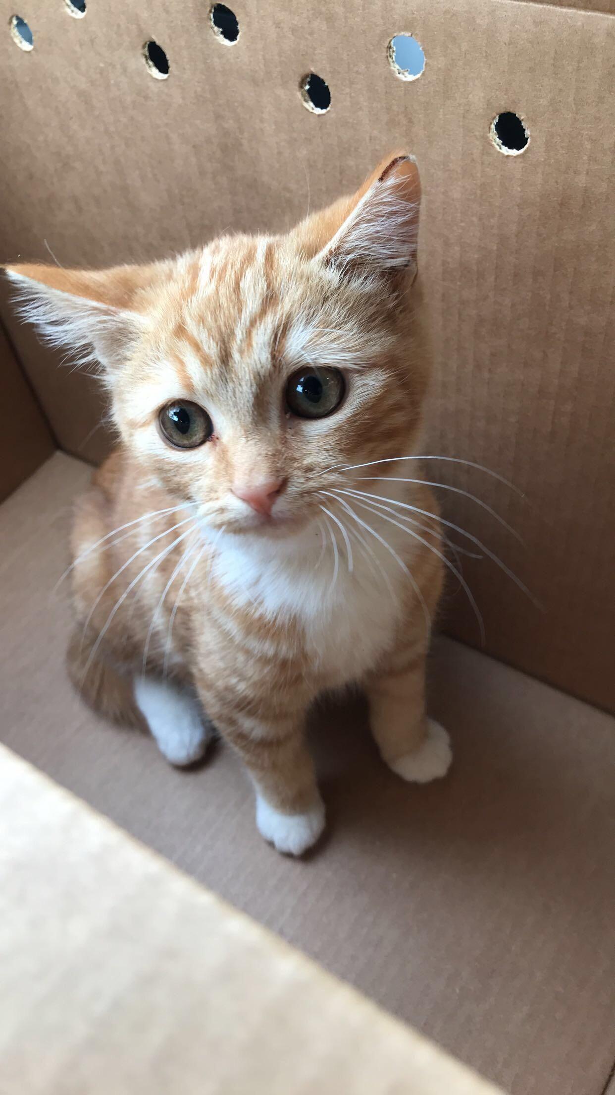 Reddit please meet my newest baby boy Roo  #aww #cute