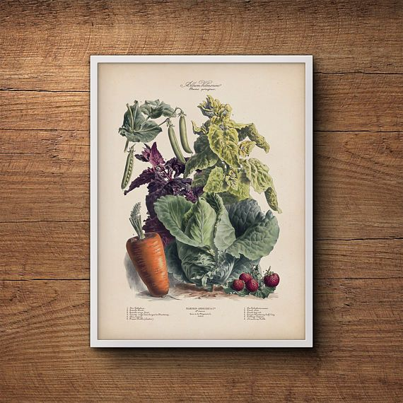 Kitchen Art Vegetables Print Botanicals Kitchen Art: Vegetable Print, French Vegetables Poster, Botanical Print
