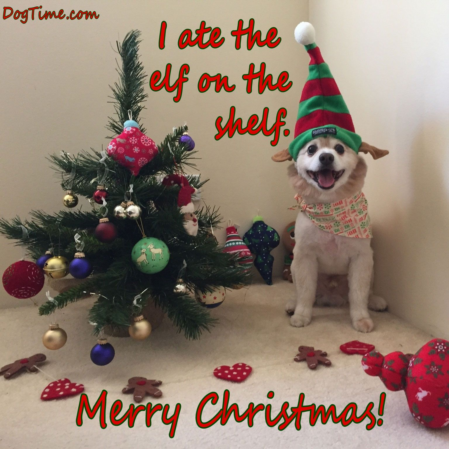 30 Dog Christmas E Cards To Share With Your Friends And Family