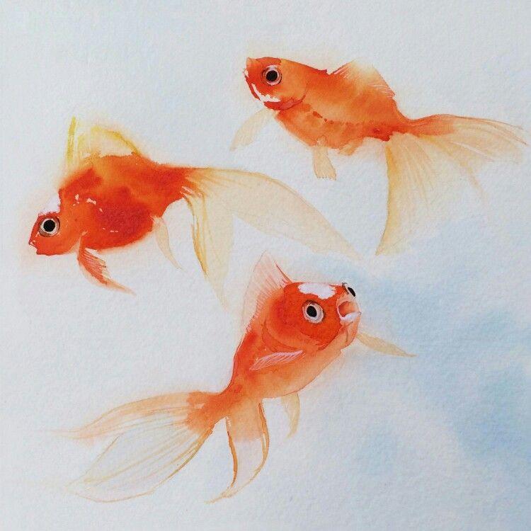 Watercolor Goldfish Goldfish Watercolor Goldfish Art