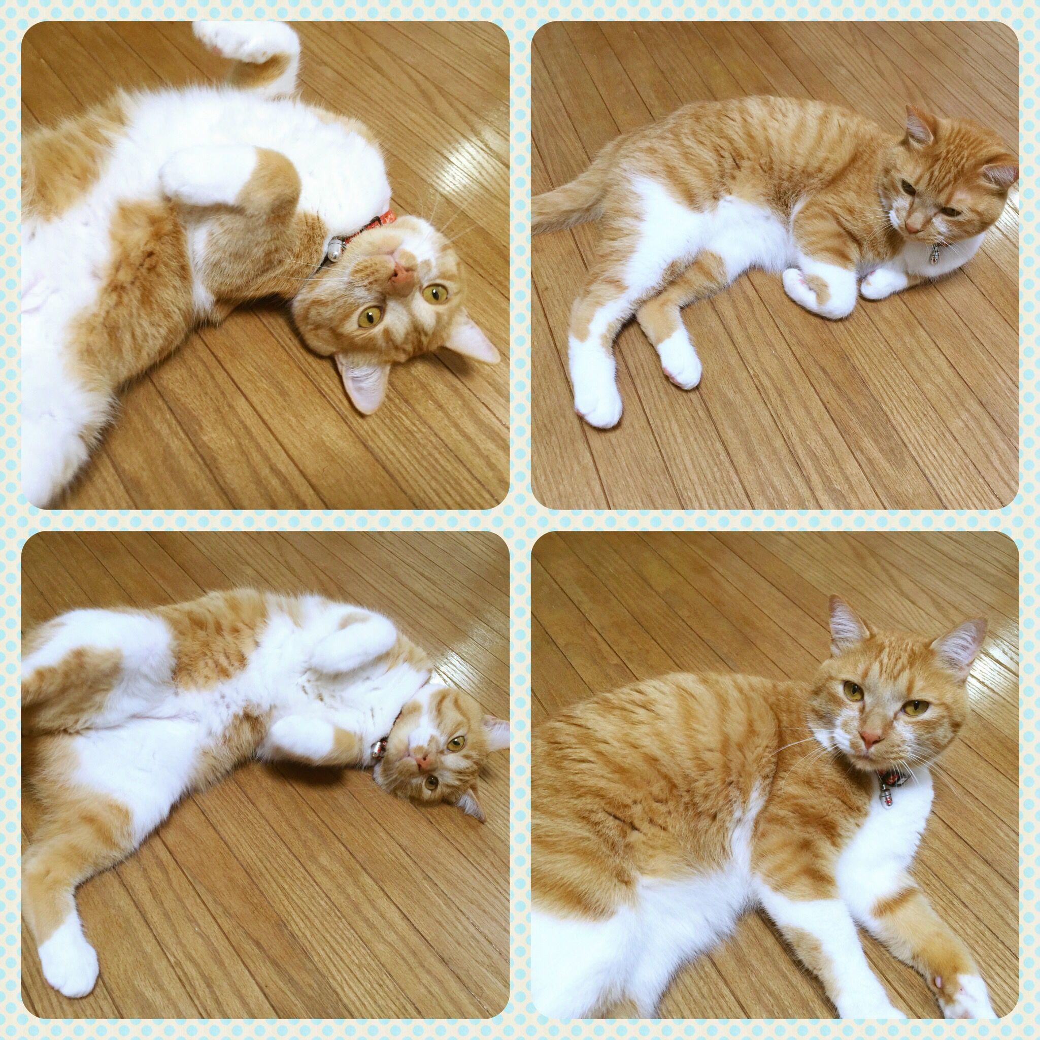 2016.05.06 #うち猫 #猫 #幸せは誰かの活力