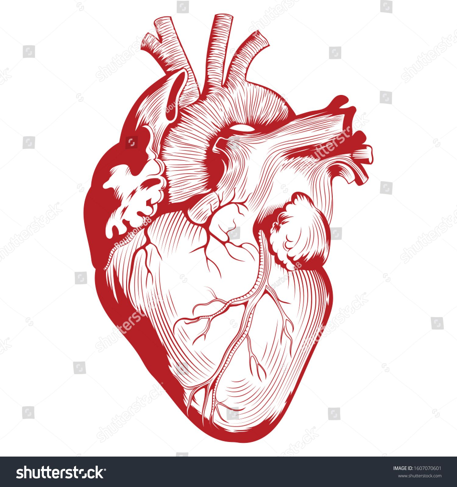 Vector Free Buckle Cartoon Heart Human Heart Heart Cells Png And Vector With Transparent Background For Free Download Cartoon Heart Cartoon Clip Art Vector Free