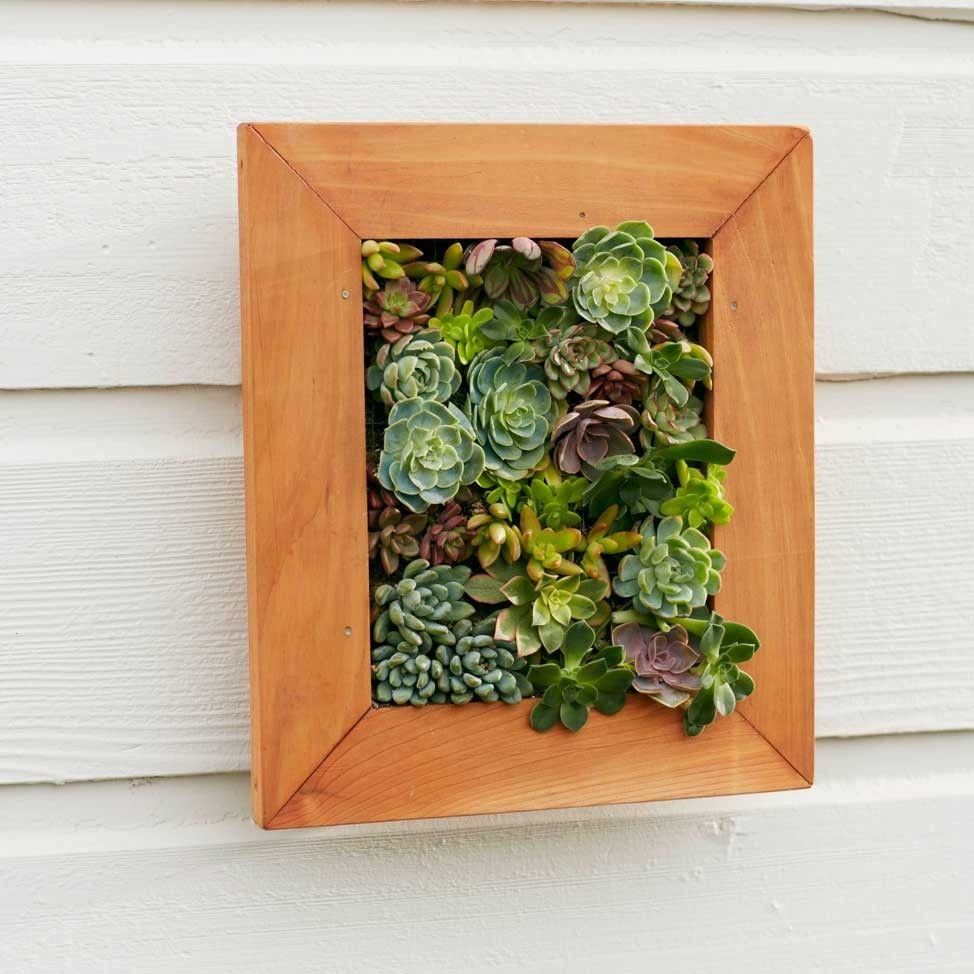 Framed succulent wall art project inspiration real plants would be