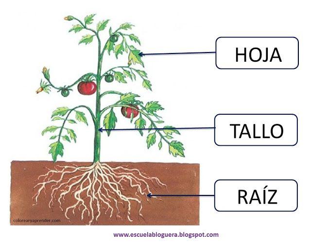 Escuela Bloguera Las Plantas Partes De La Planta Plantas Imagenes De Plantas