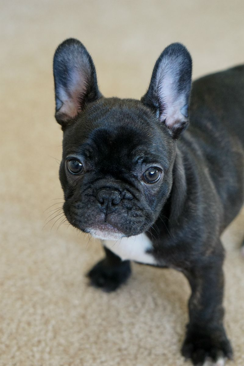 Puppy love u tips and tricks for new puppy parents