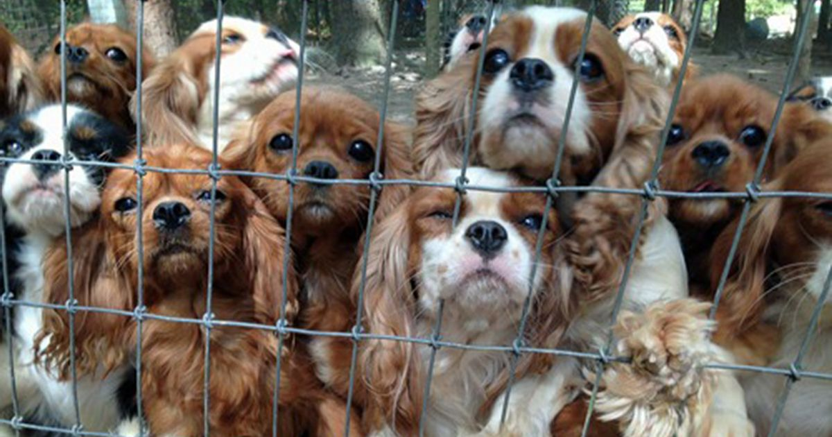11++ Lucky farms animal rescue images