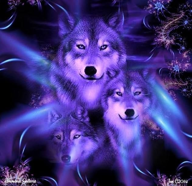 Neon Blue My Love For Wolves Wolf Pictures Wolf