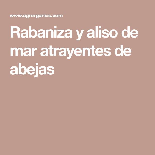 Rabaniza Y Aliso De Mar Atrayentes De Abejas Malas Hierbas Hierbas Agricultura Ecologica