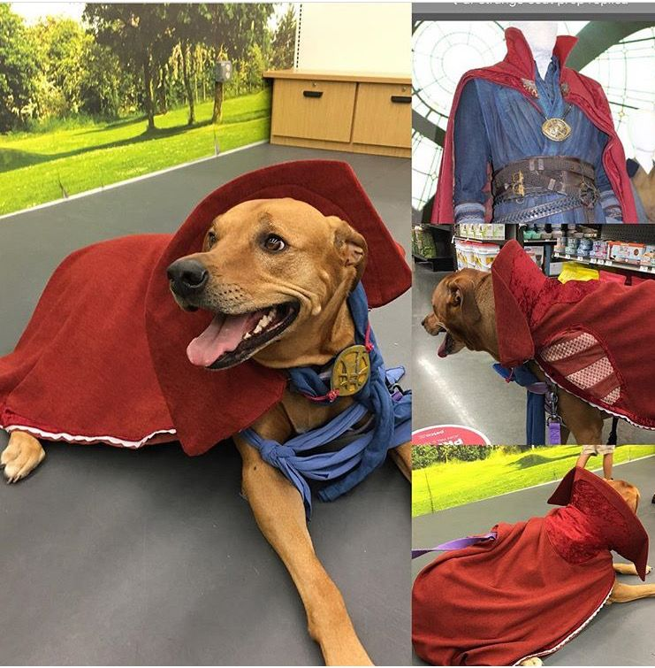 Dr Strange Dog Costume For Sadie Dog Costumes Dog Costume Dr