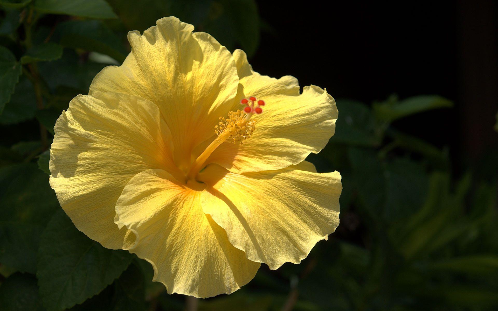 Красивые желтые цветы фото должен