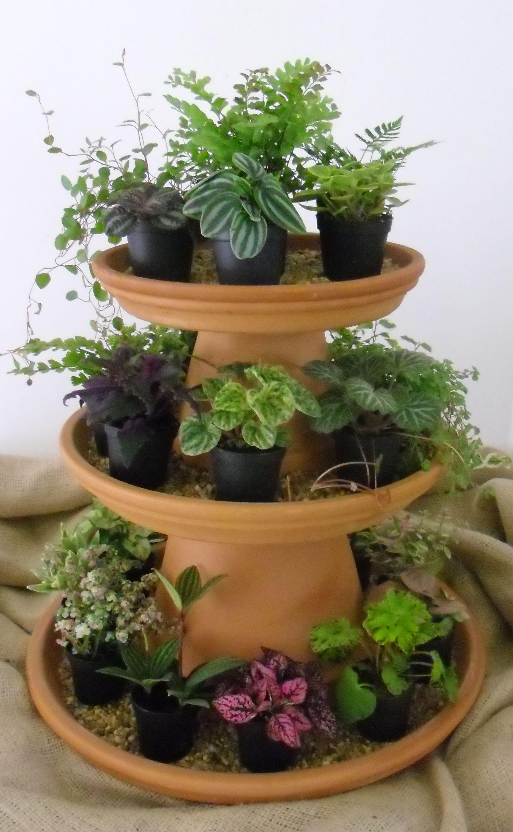 Ittie Bitties at IGC! | Products I Love | Pinterest | Gardens ...
