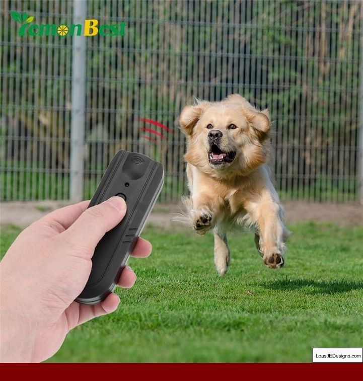 How to train your dog to crate and pics of training a dog