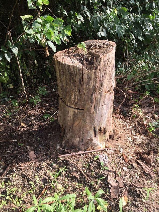 Gnome Tree Stump Home: Gnomes, Tree Stump, Wood