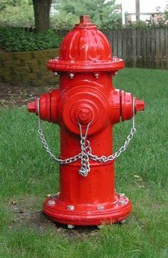 Eye Candy For Boy Dogs Fire Hydrant