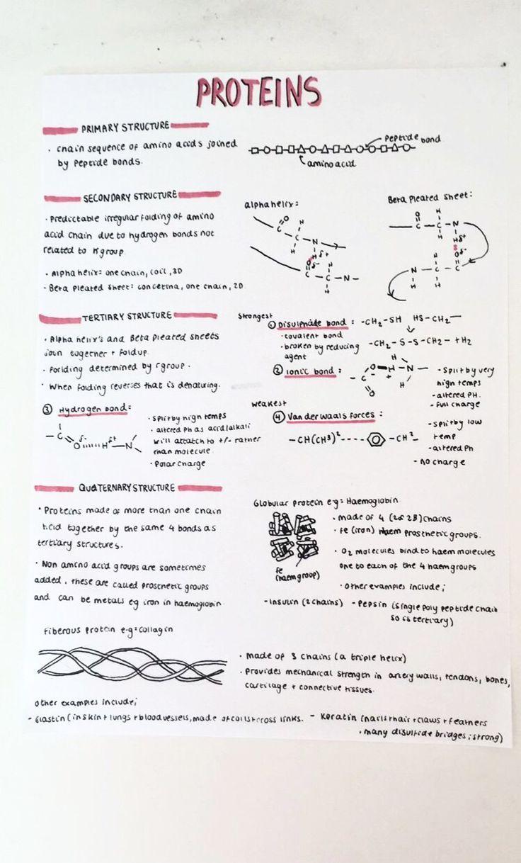A-Level-Notizen zur Biologie; Proteine - Bildung #aestheticnotes