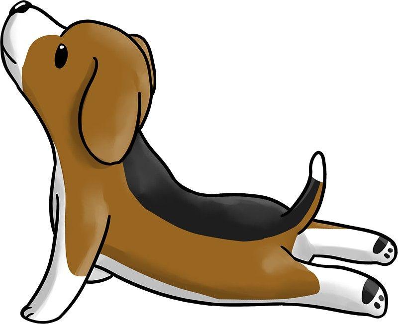 Beagle Yoga Pose Pegatina Cute Beagles Funny Dog Faces