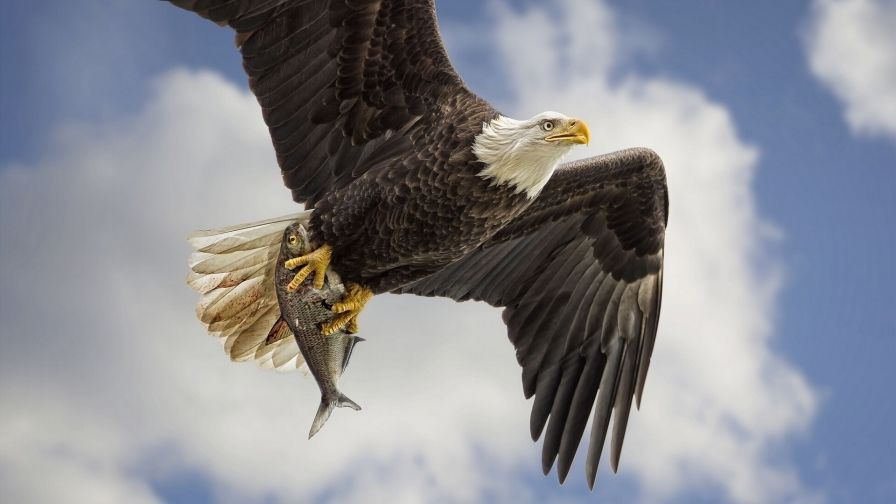 Pin Pa Hd Wallpapers Android Eagle full hd wallpaper download