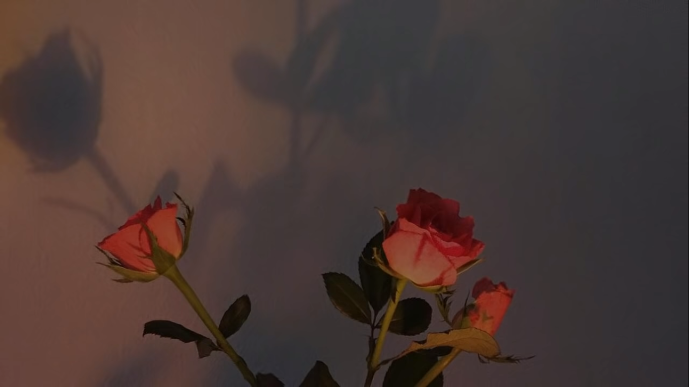 Rose Desktop Wallpaper