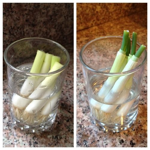 10 Vegetables You Re Grow From Kitchen Scraps: How To Re-Grow Vegetables In A Glass