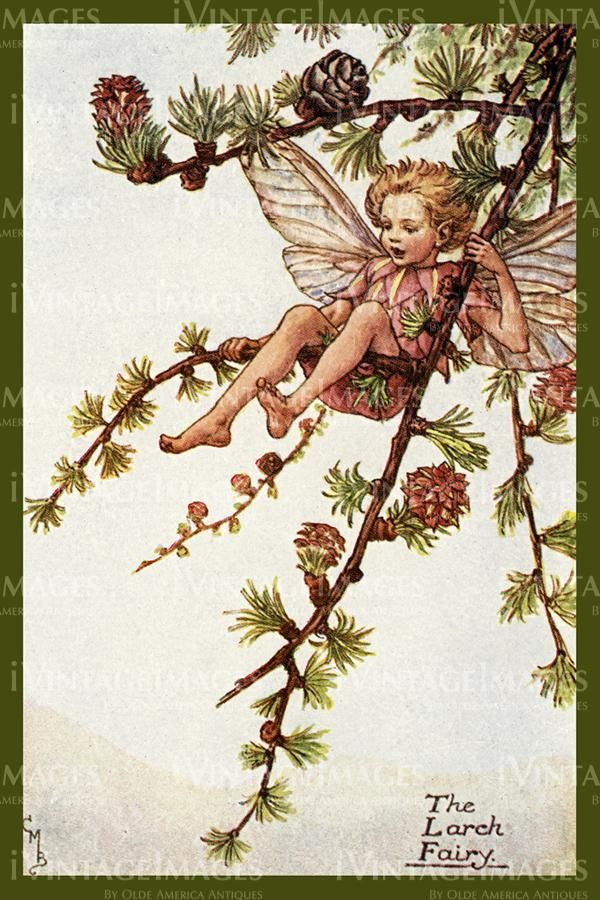 Cicely Barker 1923 - 50 - The Larch Fairy -   24 fairy garden drawing