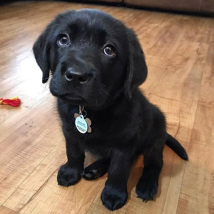 Cute Puppies Puppies Training Tips Best Puppy Names Cute German Shepherd Puppies Dogs Diy Treats Cute German Shepherd Puppies Best Puppy Names Your Dog