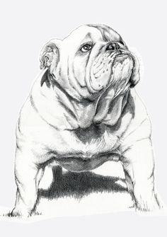 Coloriage Bouledogue Anglais.Dogs Bull Dog Art Print By Ruben Pino Dessiner Pour Rayan