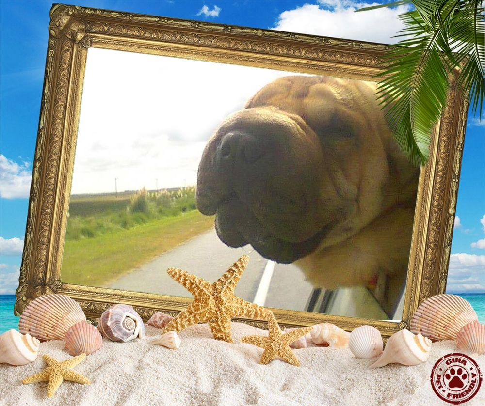 Pin de Guia PetFriendly en Verano Pet Friendly 2014