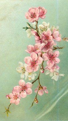 Sakura Flower Art Blossoms Art Blossom Tattoo