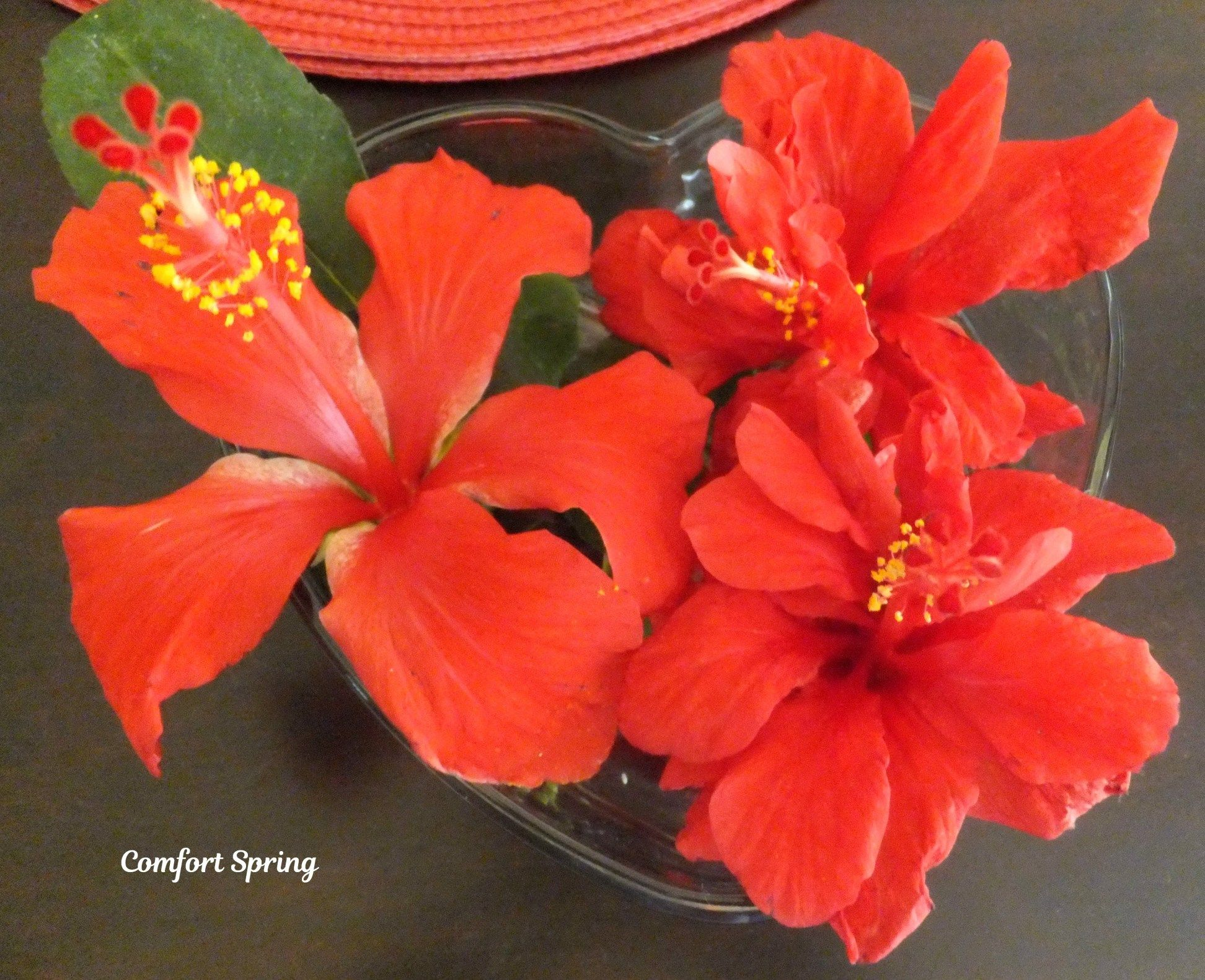 Waiting For My Hibiscus Comfort Spring Flowers Red Gardening