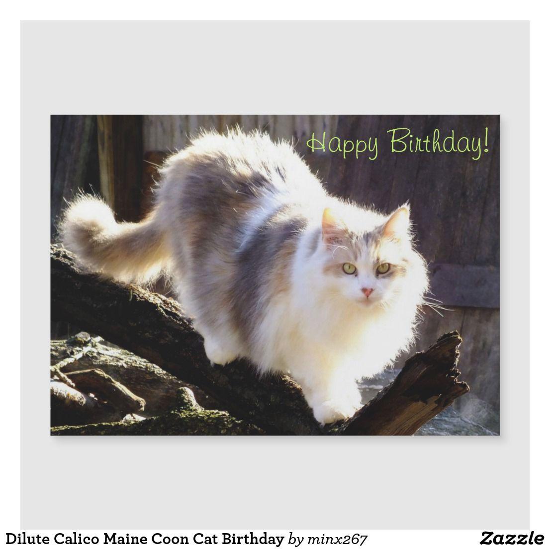 100th Birthday Kitten Humor Card 40th Birthday Cards 50th