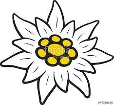 Coloriage Fleur Edelweiss.Resultat De Recherche D Images Pour Edelweiss Fleur Dessin