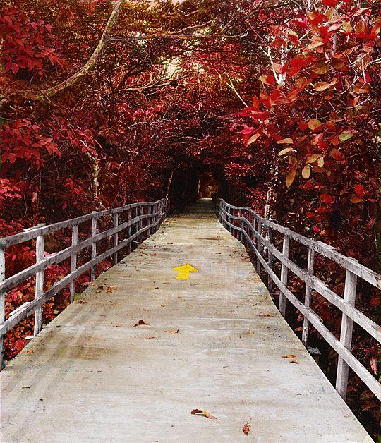 Wooden bridge with red plants around