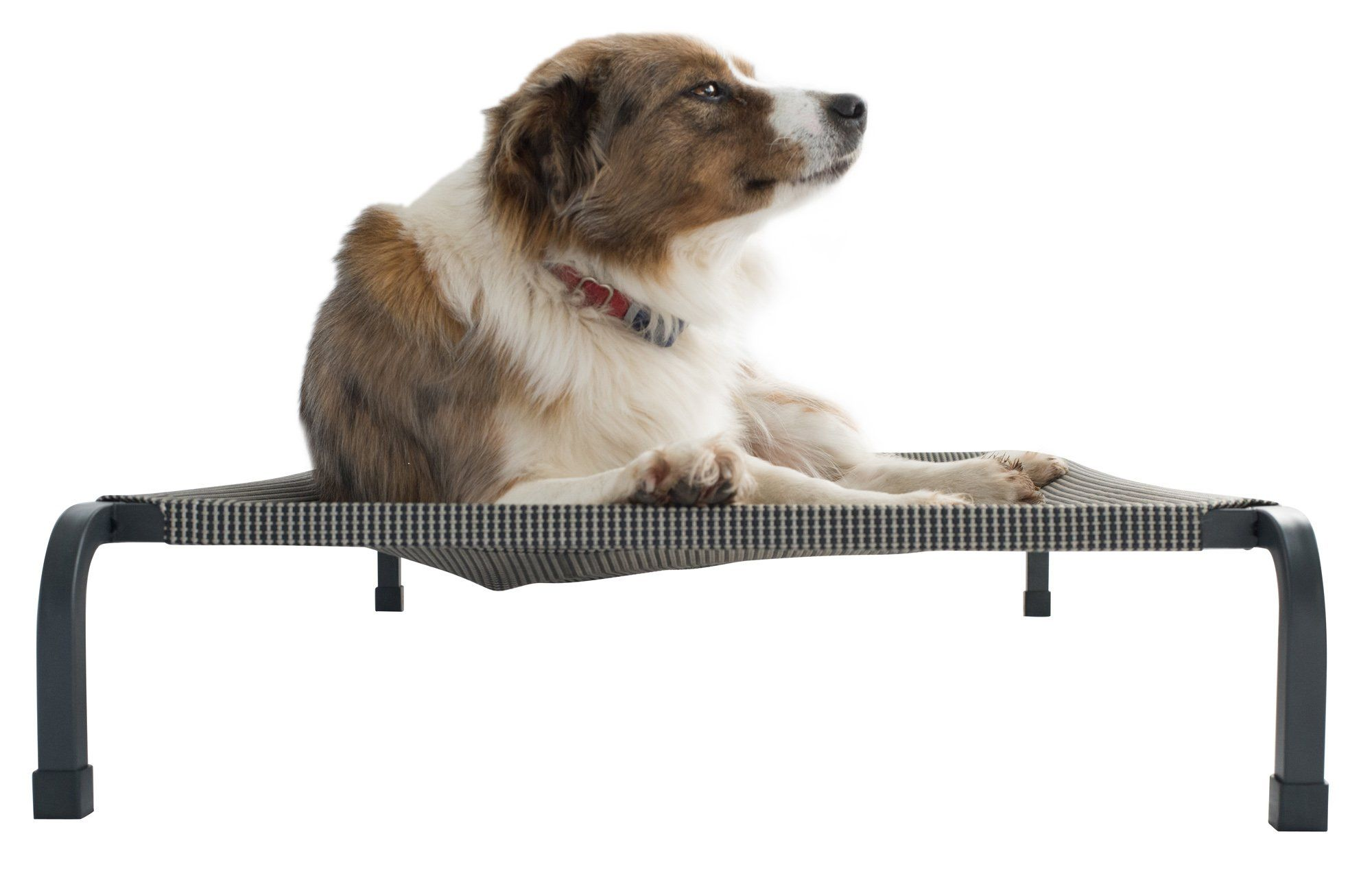 Fiksu Pets Heavy Duty Elevated Pet Bed Medium With Extremely Durable Breathable Tear Resistant Mesh Cover With Steel Square Tube Frame Che Pets Dogs Pet Bed