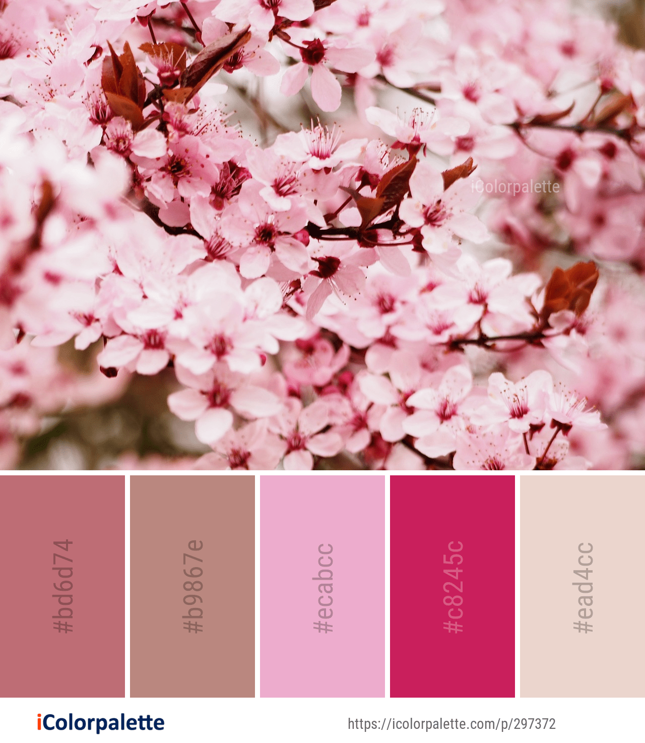 Color Palette Ideas From 1804 Blossom Images Icolorpalette Color Palette Pink Color Design Inspiration Color Balance